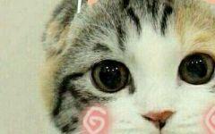 情侣头像动物猫咪