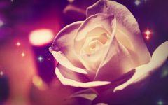带玫瑰伤感图片带字