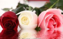 伤感玫瑰带字图片