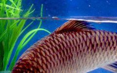 鱼的微信头像图片大全