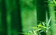 微信头像竹子自然风景