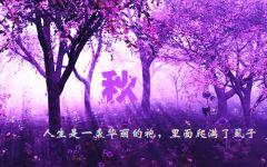 浪漫紫色唯美图片大全
