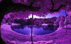浪漫神秘紫色唯美图片