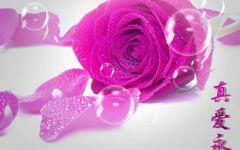 浪漫泡泡玫瑰图片大全