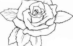 画花朵图片大全