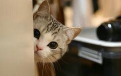 猫图片唯美
