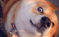 狗表情包图片