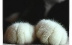 猫咪爪子可爱图片