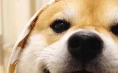 情侣狗头像图片