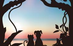 动物情侣图片