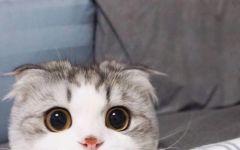猫的图片可爱萌萌