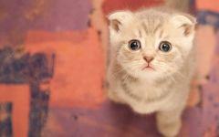 猫的图片可爱卖萌
