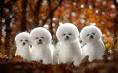 很可爱的狗狗图片