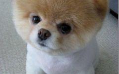 小狗超可爱的图片