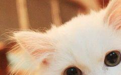 可爱猫咪头像图片