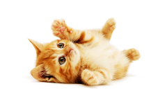 猫猫图片可爱
