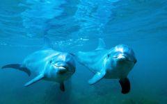 可爱的海豚图片