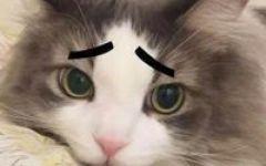 可爱喵斗图图片