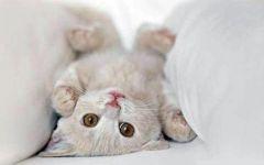 小猫咪图片可爱