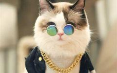 可爱萌猫咪图片