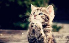 猫咪很可爱图片