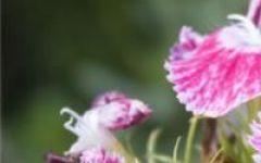 微信头像自然花朵
