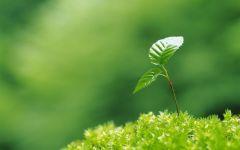 春天唯美小芽图片