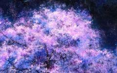 星空樱花的图片唯美