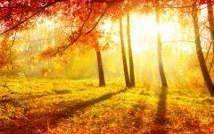枫叶图片秋天唯美