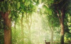 森林鹿唯美图片