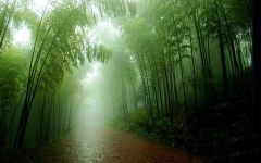 雨中的图片唯美