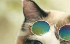 男生微信头像是猫