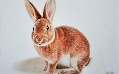 动物彩铅图画