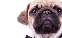 小狗情侣头像