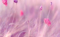 浪漫美丽的图片