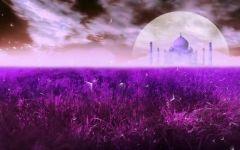紫色的浪漫图片