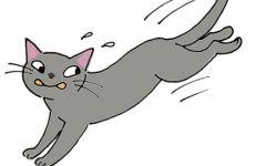 大猫图片卡通