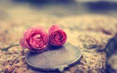 爱情花朵图片