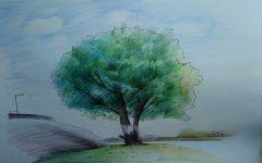 树的绘画彩铅
