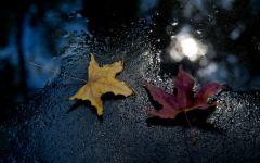 风吹落叶图片伤感