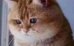 悲伤猫表情图片