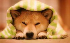 萌狗表情图片