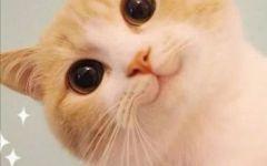 可爱猫咪歪脸图