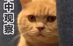 小猫组图表情