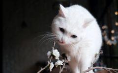 可爱白猫咪图片
