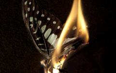 飞蛾扑火般的爱情图片