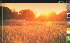 浪漫阳光图片