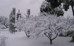 冬季浪漫小雪景图片