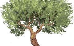 动漫树图片