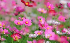 唯美花丛图片